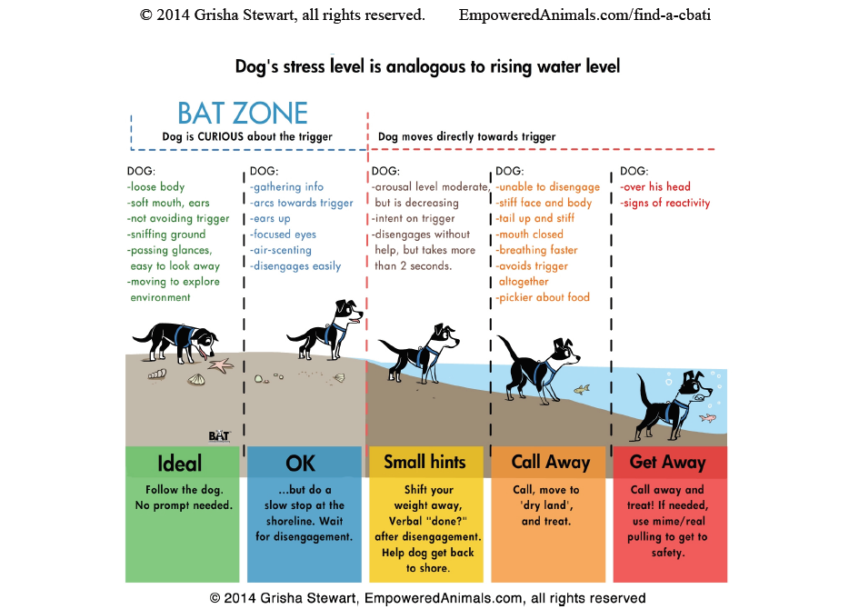 Positive Training For Reactive Dogs